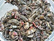 Crabs сырцовая свежая в рынке Стоковая Фотография RF