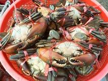 Crabs сырцовая свежая в рынке Стоковые Изображения