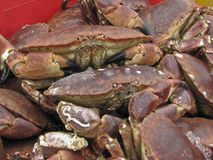 Crabs 1. Live crabs for sale at food market Stock Photos