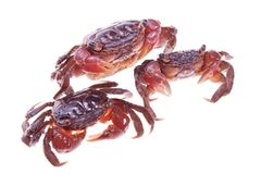 Crabs Royalty Free Stock Images
