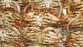 Crabs Royalty Free Stock Image