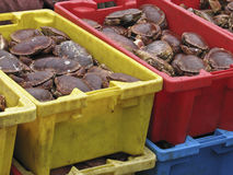 Crabs 2. Live crabs for sale at food market Stock Photography