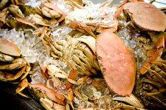Crabs. Fresh red cooked crabs on ice at a market Royalty Free Stock Photo