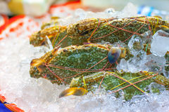 Crabs. Are generally covered with a thick exoskeleton, and armed with a single pair of chelae (claws Stock Photo