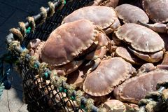 Crabs stock photo