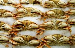 Crabs. In a market stock photos