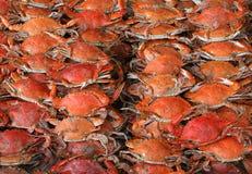 Crabs. Sea food Royalty Free Stock Photos