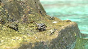 Crabs bask in the sun on a tropical beach. Slow motion. Crabs bask in the sun on the tropical beach. Slow motion stock footage
