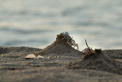 Crabs on the beach royalty free stock images