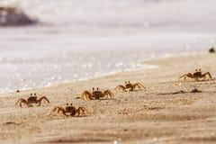 Crabs on beach royalty free stock photos