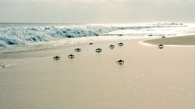 Crabs on the beach Stock Photography
