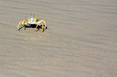 Crabs on the beach Royalty Free Stock Image