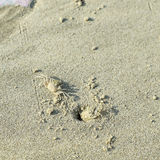 Crabs on the beach. Stock Photo