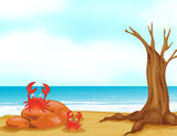 Crabs on a beautiful beach Royalty Free Stock Photography
