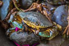 Crabs bind in market Royalty Free Stock Images