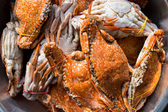 Crabs boiled Royalty Free Stock Photography