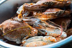 Crabs boiled Royalty Free Stock Images
