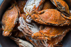 Crabs boiled Royalty Free Stock Image