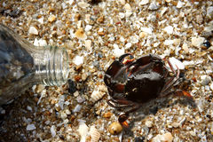 Crabs and bottle glass on beach Stock Images
