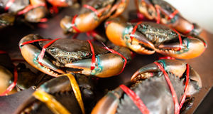 Crabs close-up Stock Photography