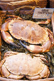 Crabs. Closeup of two big crabs for sale at fish market in Paris Royalty Free Stock Photo