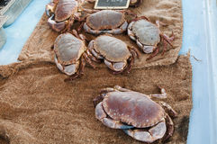 Crabs on a cloth of jute in a fish-shop Royalty Free Stock Image