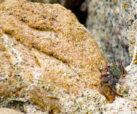 Crabs Stock Images