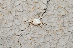 Crabs die because of drought Stock Image