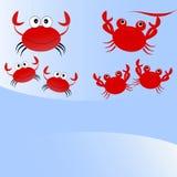 Crabs a família Imagem de Stock