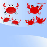 Crabs family Stock Image