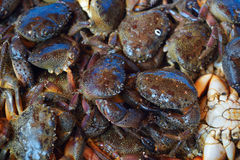 Crabs in fish market at Istanbul, Turkey Royalty Free Stock Photography