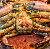 Crabs in fish market Royalty Free Stock Image