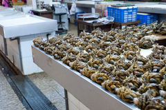 The crabs in the fishing market Royalty Free Stock Image