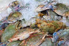 Crabs fresh Royalty Free Stock Image