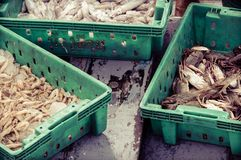 Crabs in the green plastic box at the fish market Royalty Free Stock Image