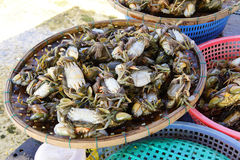 Crabs in Hoi An market Royalty Free Stock Photo
