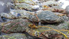Crabs. Horse crabs sea food  fresh Stock Photography