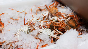 Crabs in ice Stock Photography