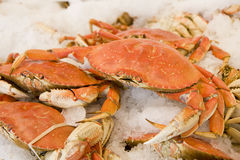 Crabs on Ice Royalty Free Stock Photo
