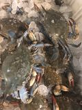 Crabs on ice before the being boiled Royalty Free Stock Images