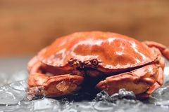 Crabs on ice - Close up of stone crab steamed in the seafood restaurant stock photo