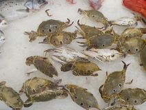 Crabs on ice ,food Stock Images