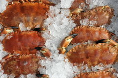 Crabs on Ice Royalty Free Stock Photography
