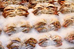 Crabs on Ice in Public Market. Crabs sitting in ice and for sale in a public market royalty free stock photo