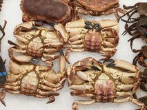 Crabs on ice in a spanish fish market Royalty Free Stock Images
