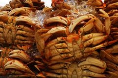 Crabs on ice. Stone crabs in an outdoor market on ice, pre-cooked and ready to consume Stock Image