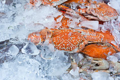 Crabs in an ice tray Stock Photos