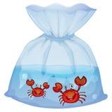Crabs inside the plastic Stock Photo
