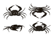 Crabs isolated on White Royalty Free Stock Photo