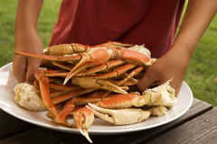 Crabs Legs Galore Royalty Free Stock Photo